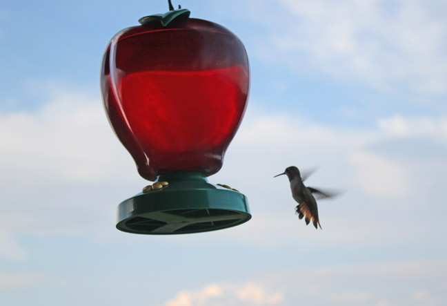 Single Hummingbird at Bear Lake