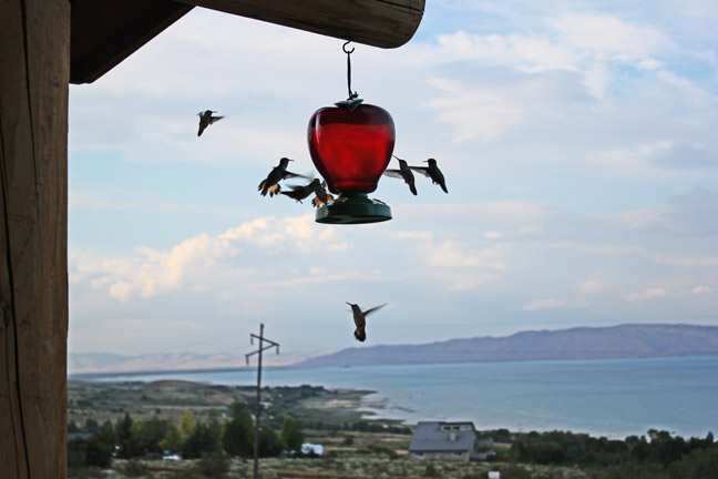 Birds at Bear Lake
